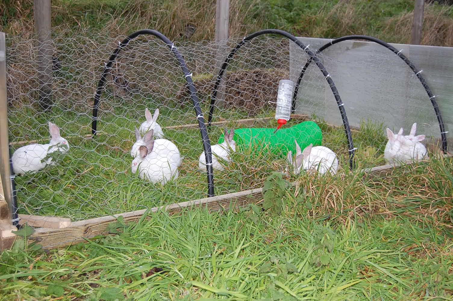Rabbit Tractor In Action Dorset Forest Garden