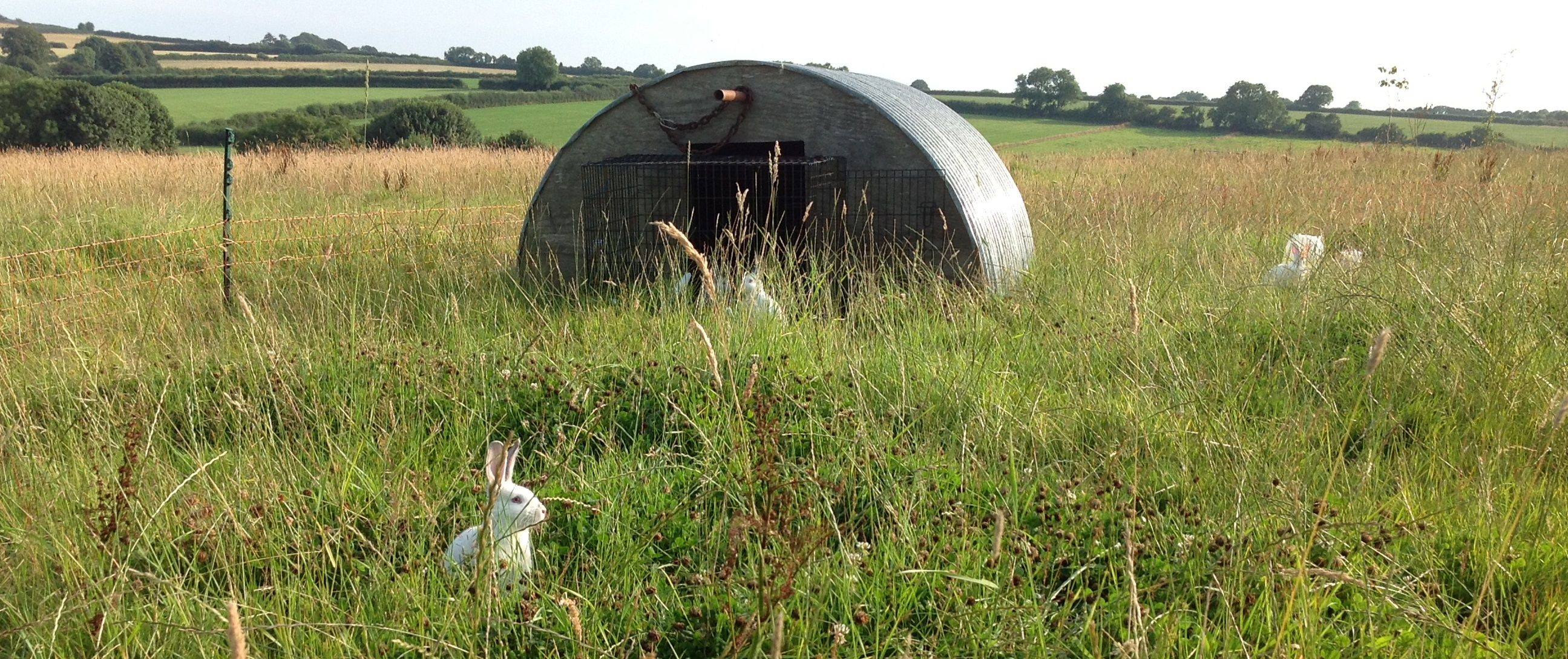Rabbits Relaxing in our Coney-Garth – Dorset Forest Garden